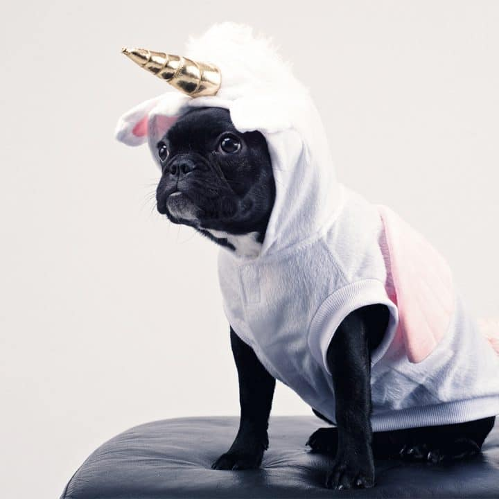 Small black dog dressed in a white bunny costume